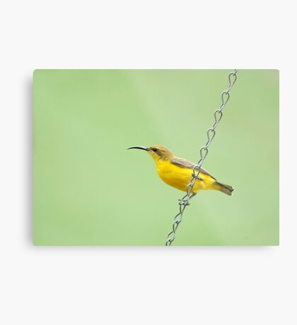 Bird on a wire - sunbird  Metal Print