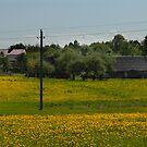 Spring in old farmstead (dandelion bloom) by Antanas