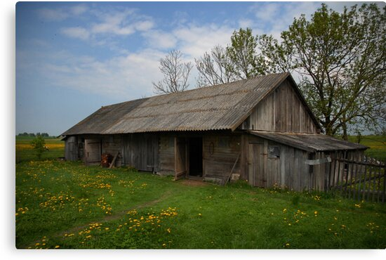 Spring in old farmstead (Barn: chickens, pigs, sheeps, cows) by Antanas