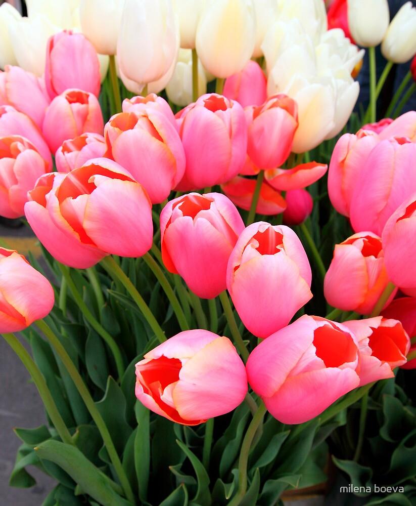 bunch of tulips by milena boeva