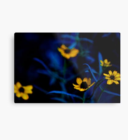 Deep down to my lawn...: On Featured work: Extra-ordinary-photography Group Metal Print