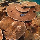 A swirl of table corals - Maldives by shellfish