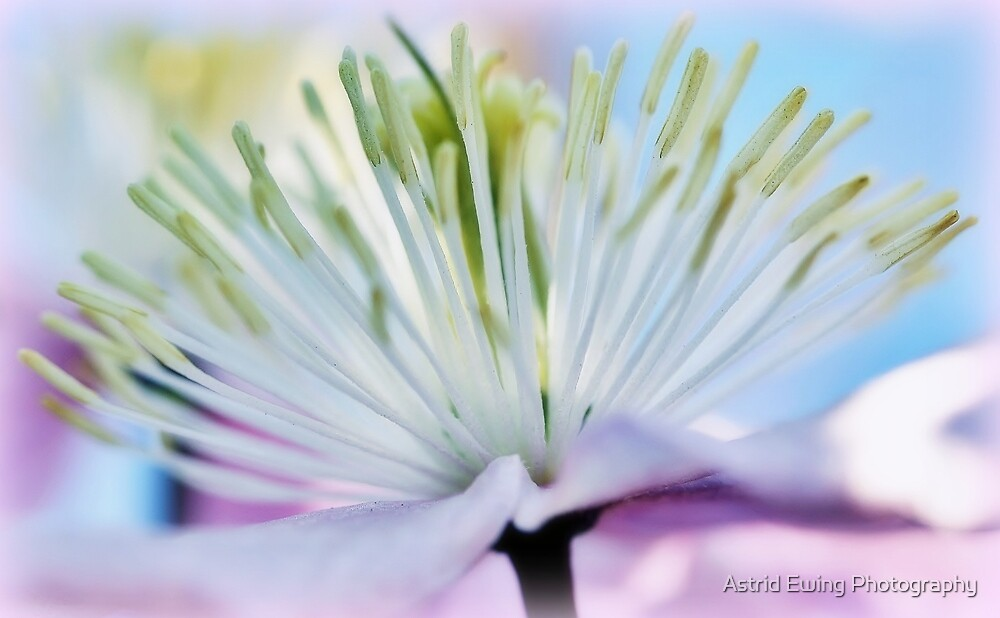 Pastel Palette by Astrid Ewing Photography