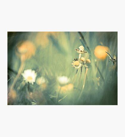 Longing Photographic Print