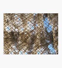 Ghost Net Photographic Print