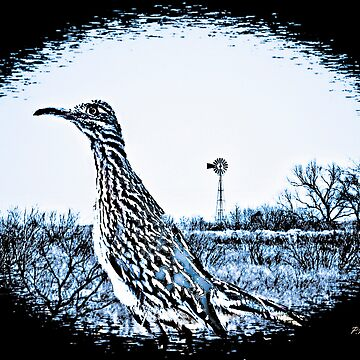 Texas Roadrunner by madampatm