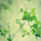 Leaves of Spring by Angela King-Jones