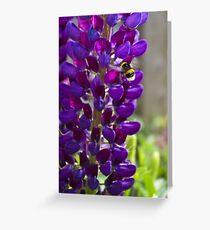 Purple Lupin Greeting Card