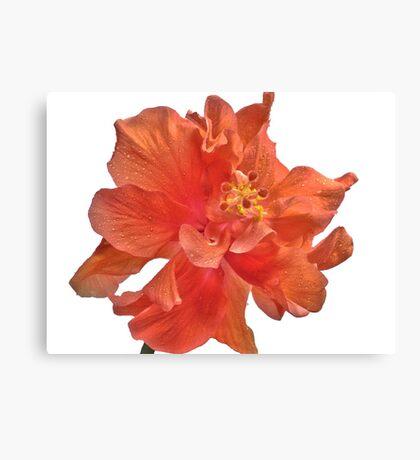 Orange Hibiscus - Close-Up Canvas Print