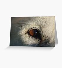 Sony upclose Greeting Card