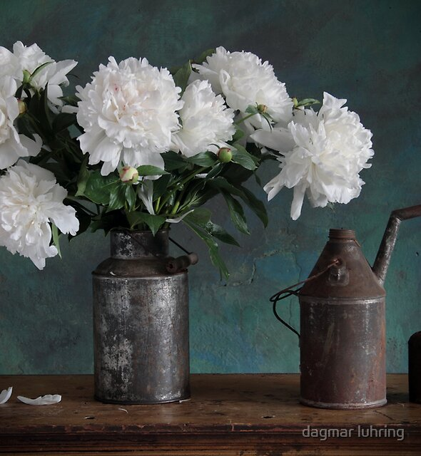 white peony by dagmar luhring