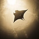 Manta with remora in the sun  by shellfish