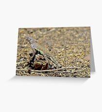 Arizona Zebra-tailed Lizard Greeting Card