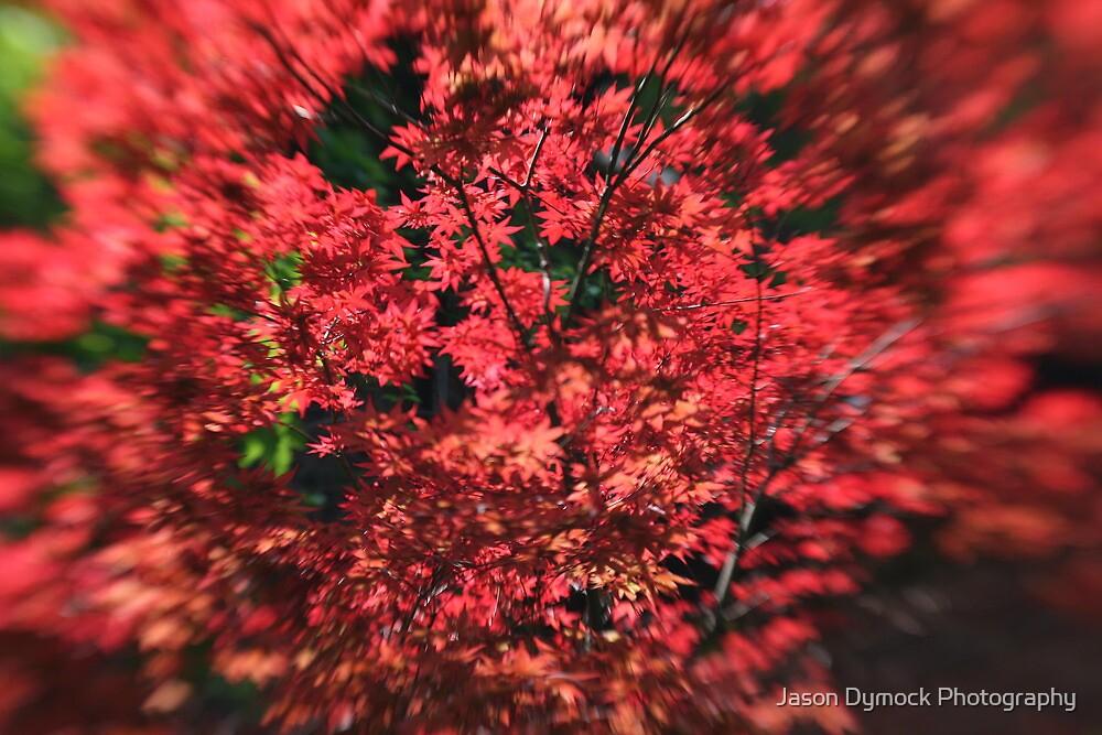 I am Red by Jason Dymock Photography