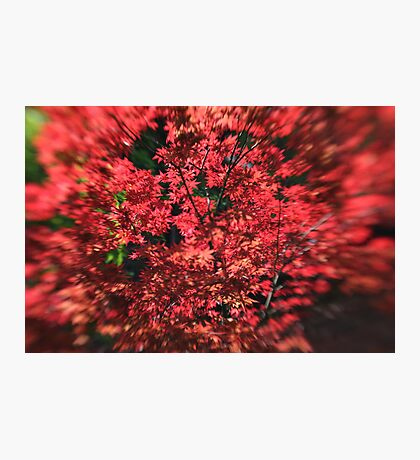 I am Red Photographic Print