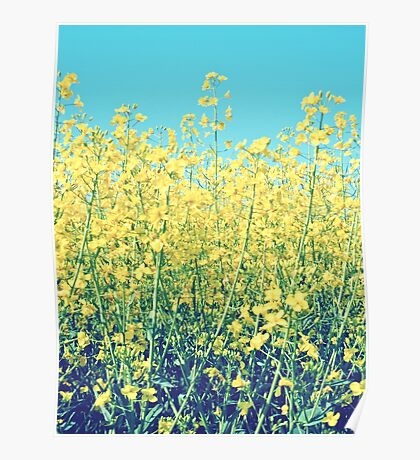 Rapeseed Summer Poster