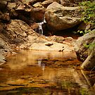 Namsan Stream by Barbara  Brown