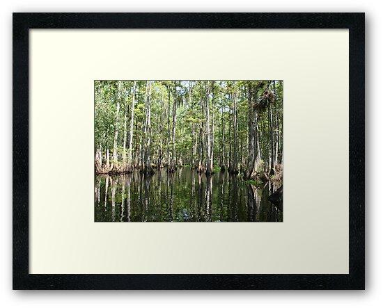 Wetlands by Yajhayra Maria