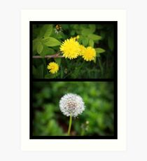 Dyptich of Dandelions Art Print