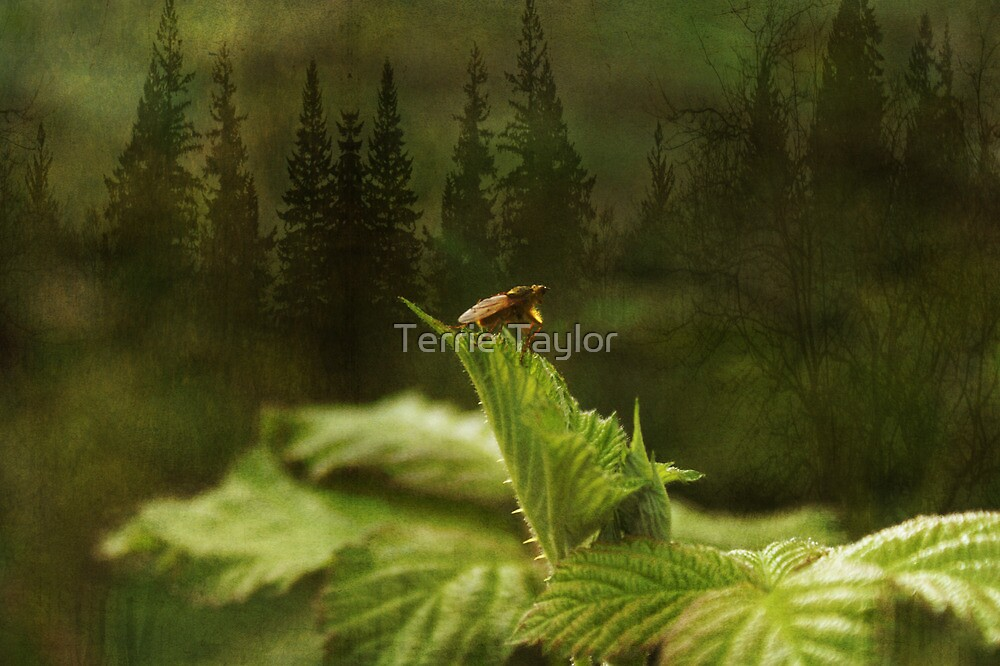 Thoughts For The Future by Terrie Taylor