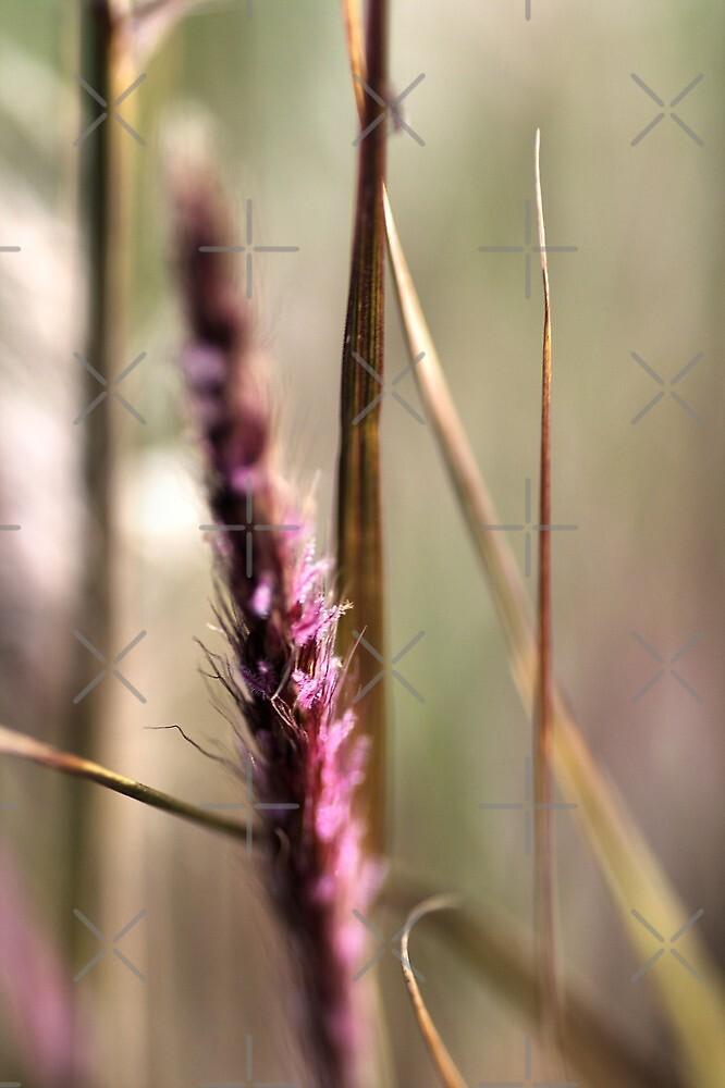 Delicate Grasses by Joy Watson