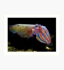 Colours of a Cuttle. Art Print