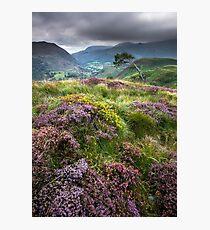 Snowdonia - Heather & Gorse above Beddgelert Photographic Print
