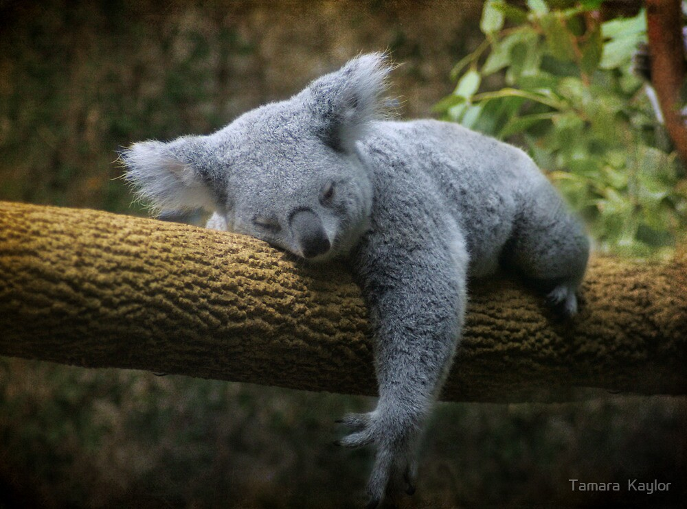 Back to Sleep by Tamara  Kaylor