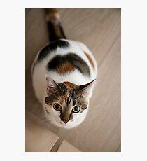 Mew? Photographic Print
