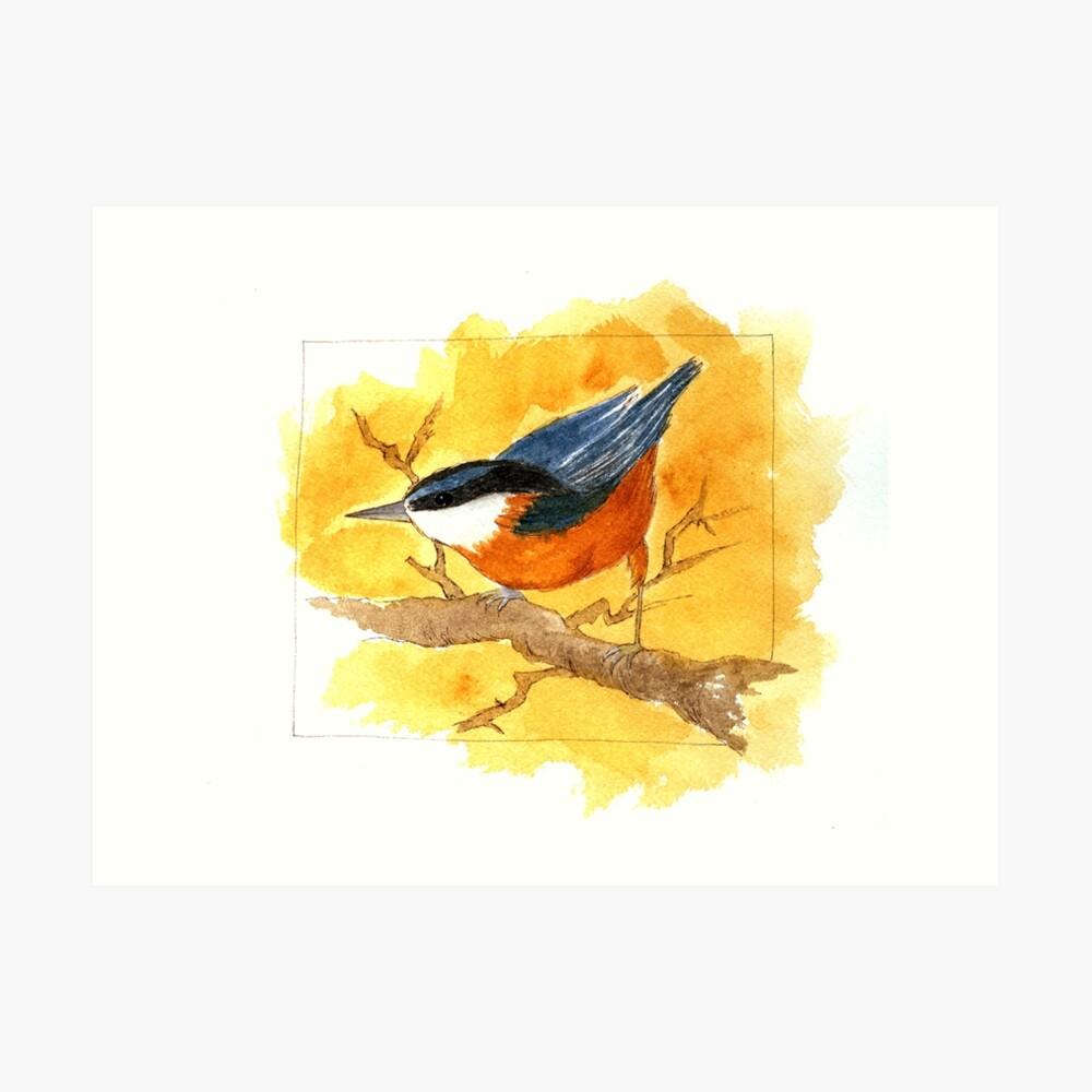 Kleibervogel Kunstdruck