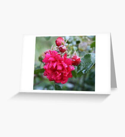 DEEP PINK ROSE Greeting Card
