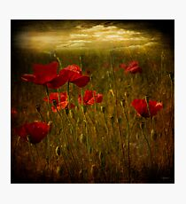Fields of Red Photographic Print