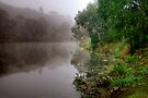 Fog on the Barwon River at Queens Park by Christine Smith