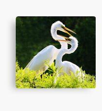 Great White Egret Mates Canvas Print