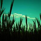 the corn field by hannes cmarits