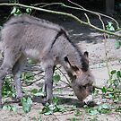 Little Donkey by BizziLizzy