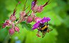 A sip of springtime by George Parapadakis (monocotylidono)