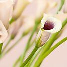 Lilies So Sweet by Marilyn Cornwell