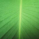 TURNING OVER A NEW LEAF TO GO GREEN. by newcastlepablo