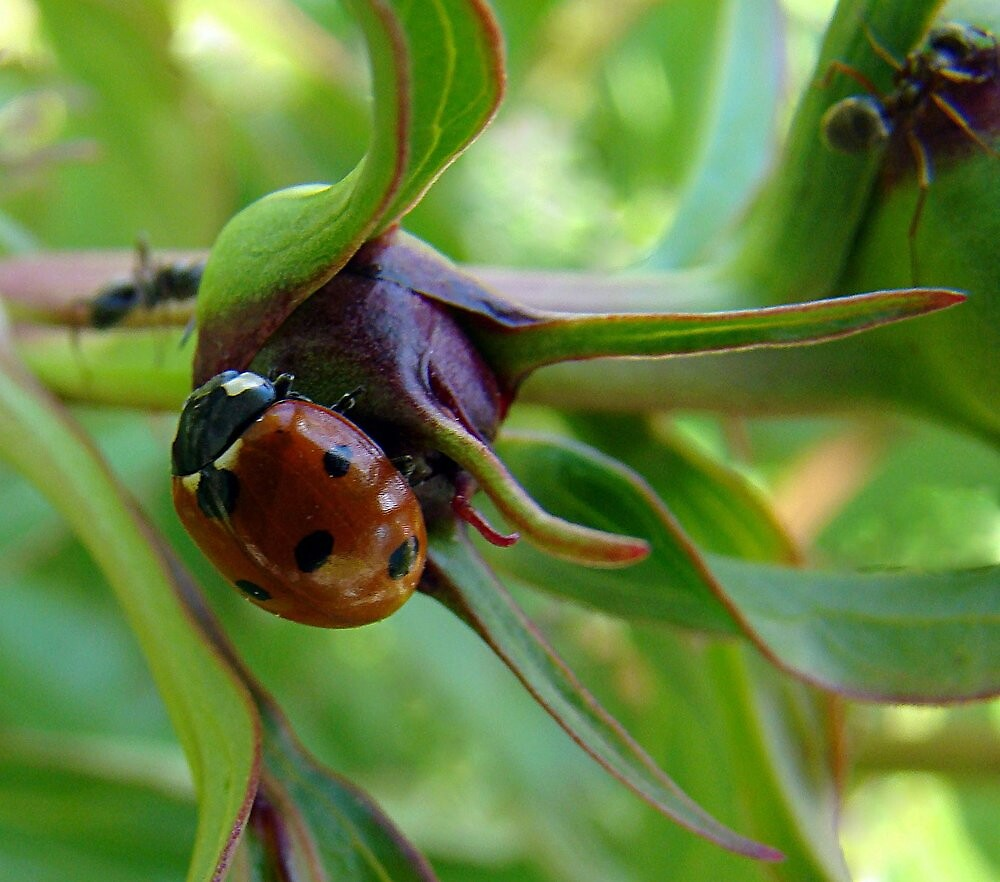 Lady Bug, Lady Bug don't fly away! by PatChristensen