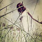 Field Days ii by Nikki Smith (Brown)