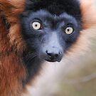 Red Ruffed Lemur Birthday Card by Lorna Mulligan