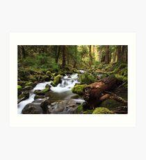 Paradise Creek, Skamania County, Washington Art Print