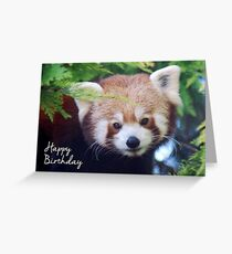 Red Panda Birthday Card Greeting Card