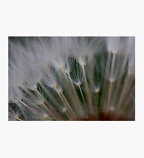 dandelion's secret 2 Photographic Print