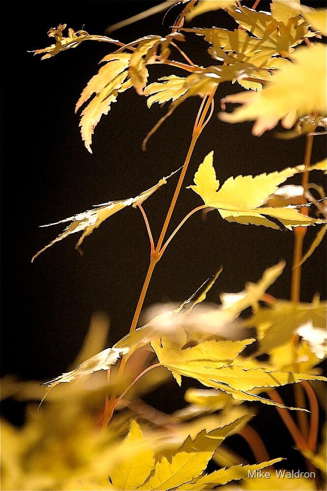 Cornworthy Garden by Mike  Waldron