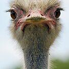 Ostrich Birthday Card by Lorna Mulligan