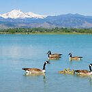 Geese and The Colorado Twin Peaks  by Bo Insogna