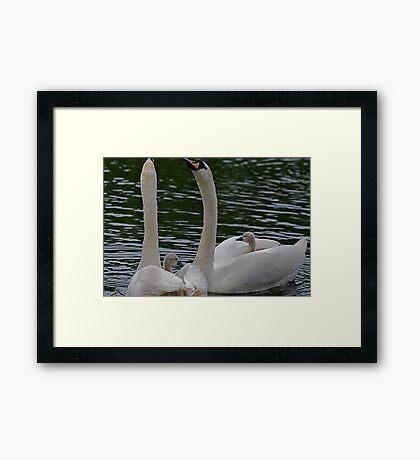 New Family Swan - lurv moves! Framed Print