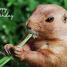 Marmot Birthday Card by Lorna Mulligan